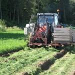 Jordbruksoppgjøret